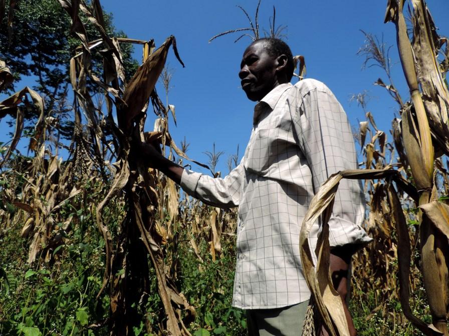 """Maize has given food security"" - Mr. George Kirabira, Maize Farmer"
